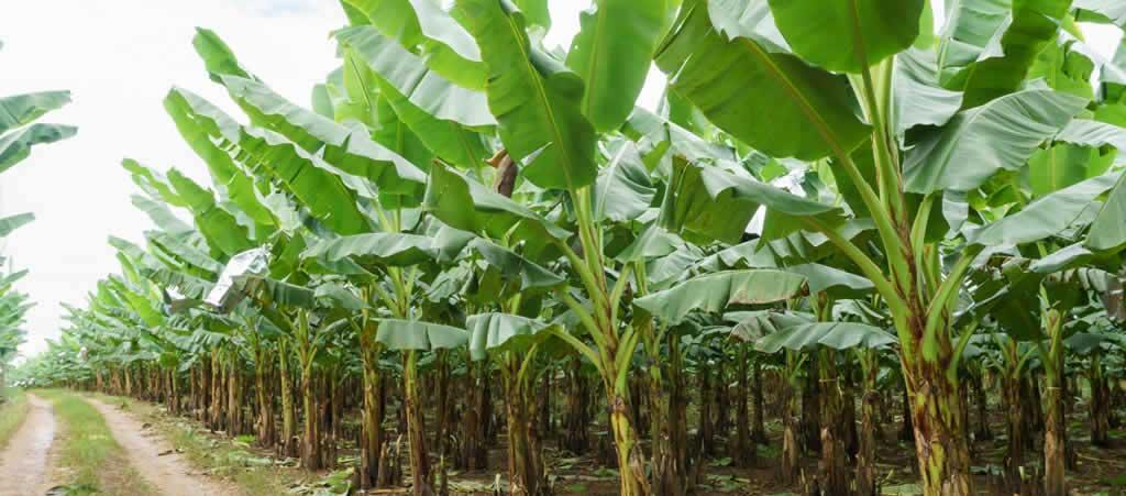 OYSADA-Oyo State Regional Agribusiness Development Programme